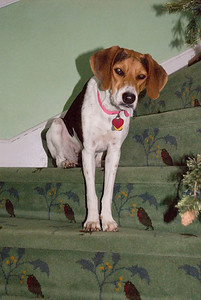 Jilly on stairs