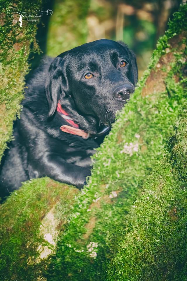 IMAGE: https://photos.smugmug.com/Pets/Dogs/i-8fqj7Xd/0/ec760d72/X2/0U6A1767-PsEdit-PsEdit-X2.jpg