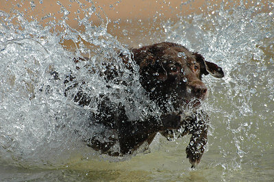 Coco crashes Lake Michigan waves