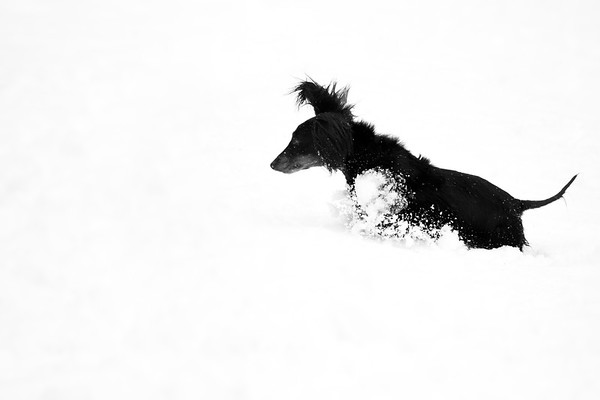 Crazy Ears In The Snow