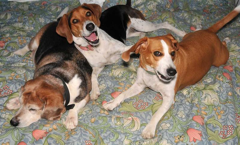 Bertie, Jilly, and Alfie