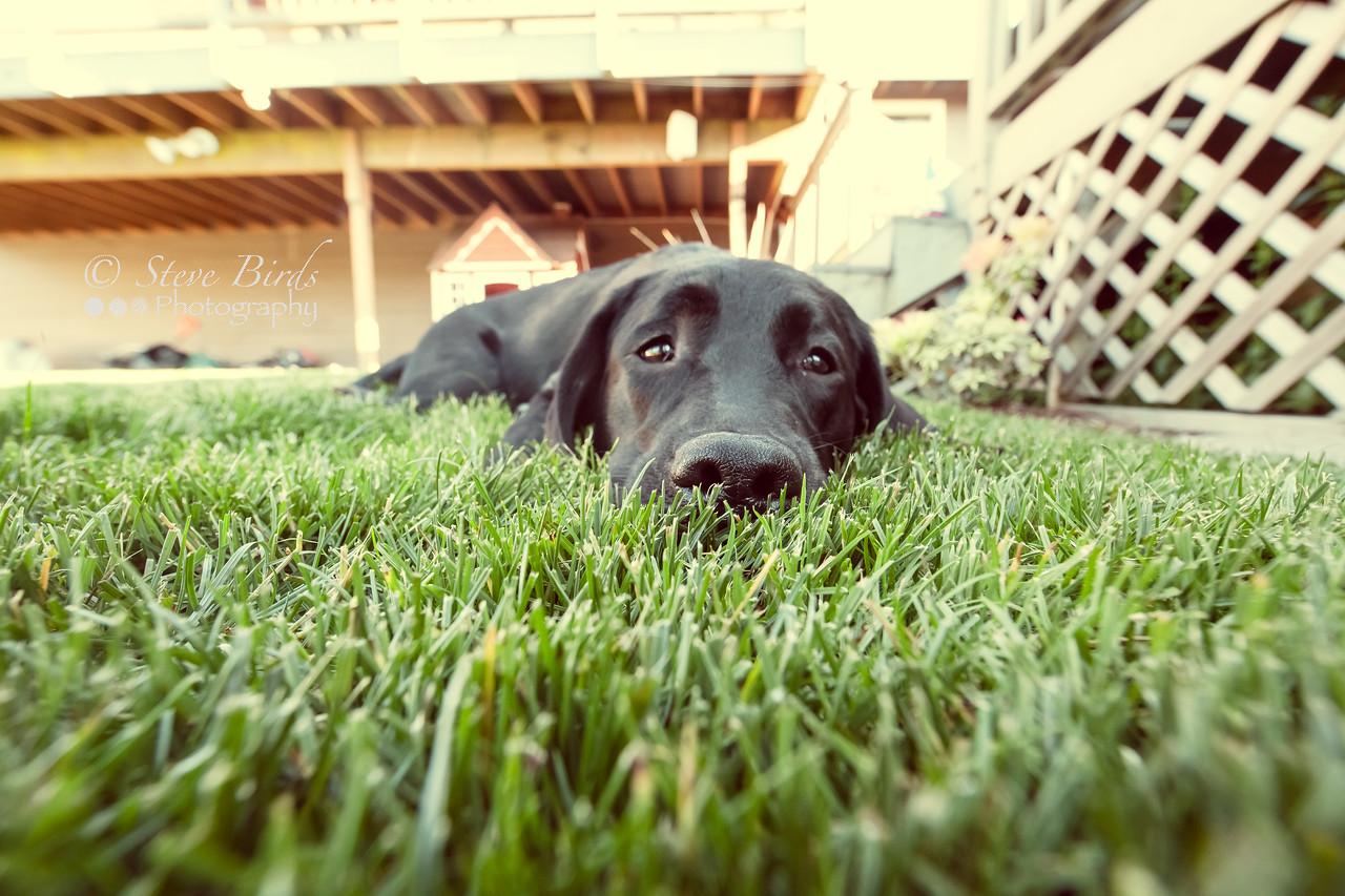 IMAGE: https://photos.smugmug.com/Pets/Dogs/i-JgpJvJL/0/X2/IMG_8232-PsEdit-X2.jpg