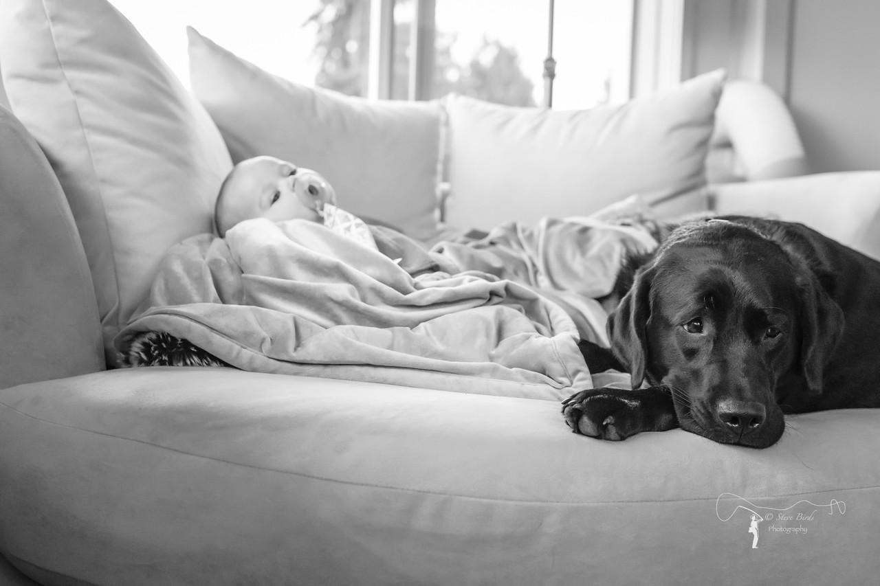 IMAGE: https://photos.smugmug.com/Pets/Dogs/i-P9RGG72/0/24c62d46/X2/0U6A7495-PsEdit-X2.jpg