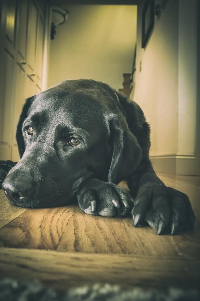 IMAGE: https://photos.smugmug.com/Pets/Dogs/i-QrZmKvp/0/6a90c1bd/X2/0U6A9795-PsEdit-X2.jpg