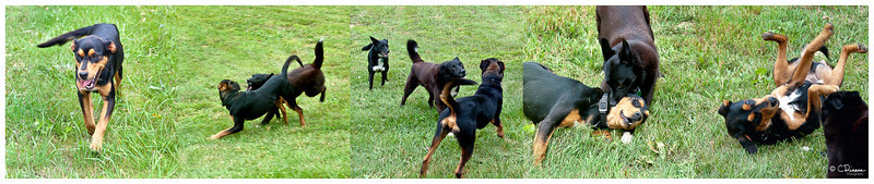 Dog Etiquette Pano copy