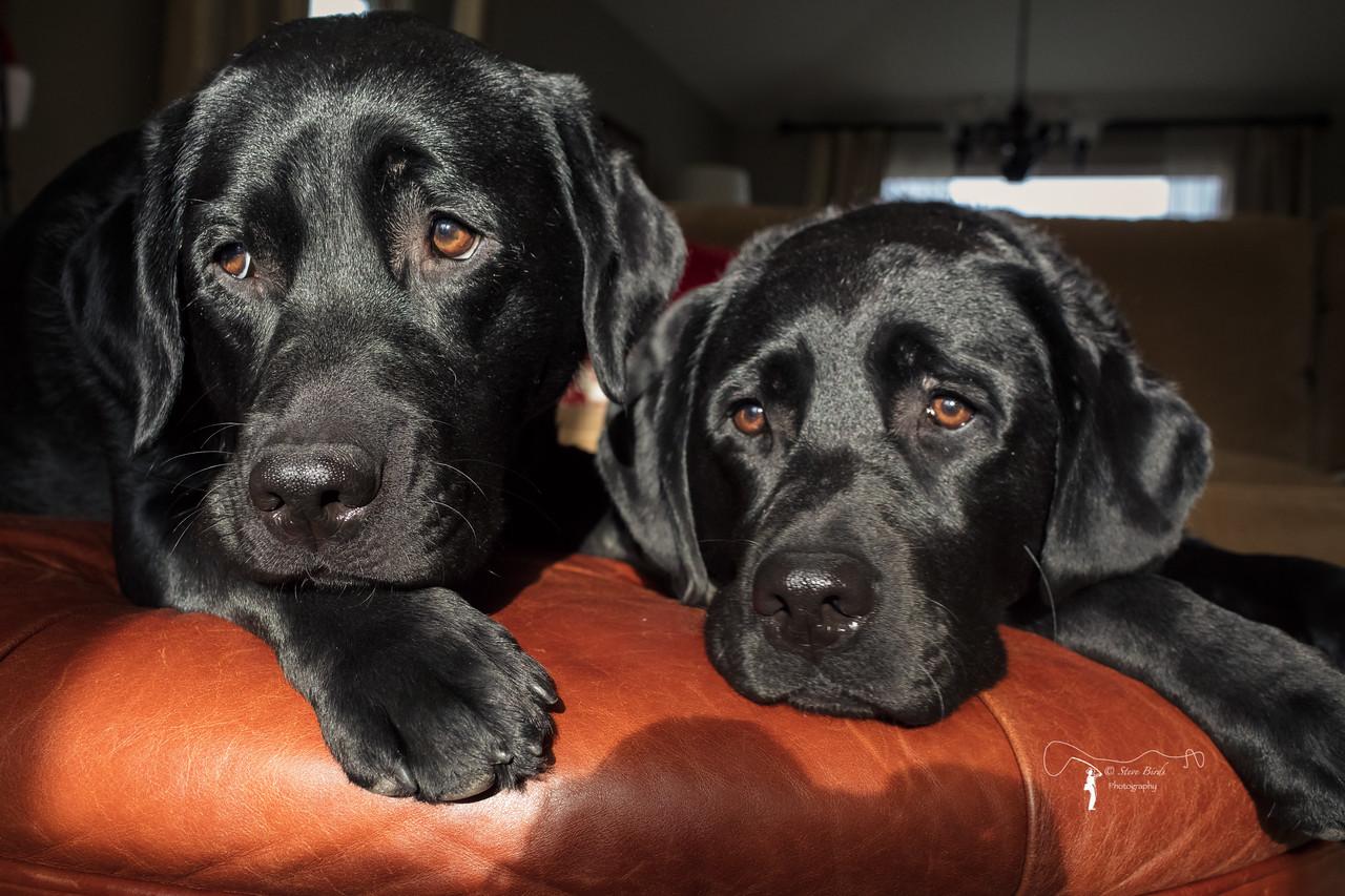 IMAGE: https://photos.smugmug.com/Pets/Dogs/i-RtwKDwM/0/c48eb490/X2/0U6A9911-PsEdit-X2.jpg