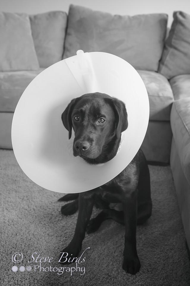 IMAGE: https://photos.smugmug.com/Pets/Dogs/i-WWvbhrn/0/X2/IMG_8117-PsEdit-PsEdit-X2.jpg