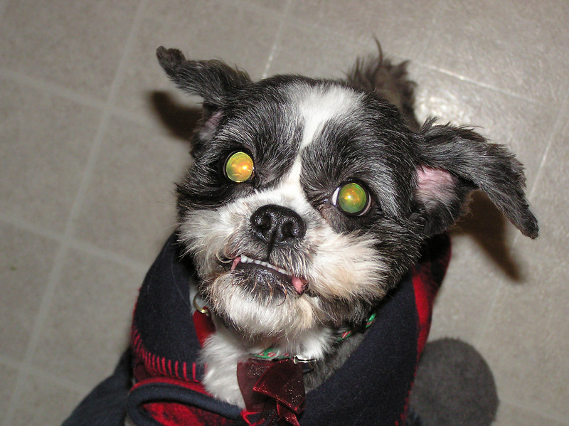 Evil Molly.  Anyone who knows my docile dog knows she doesn't have a mean bone in her.  This photo is just crazy.