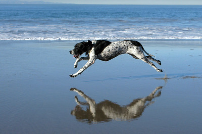 Love to Run..