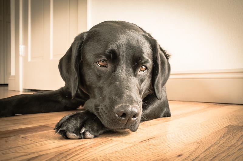 IMAGE: https://photos.smugmug.com/Pets/Dogs/i-cCVs446/0/edb80b15/L/0U6A1026-L.jpg