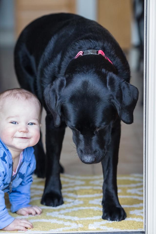 IMAGE: https://photos.smugmug.com/Pets/Dogs/i-nNBvcCs/0/af9eadc2/X2/0U6A0308-X2.jpg