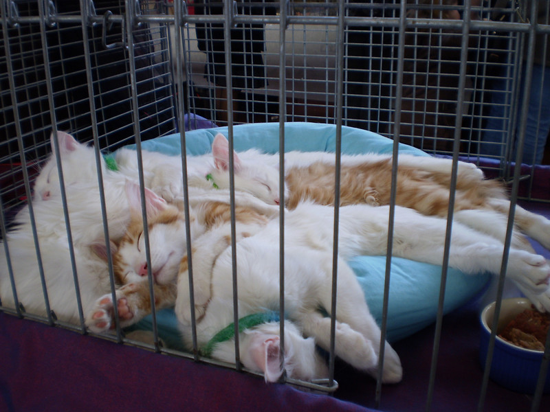 Litter during a cat show.