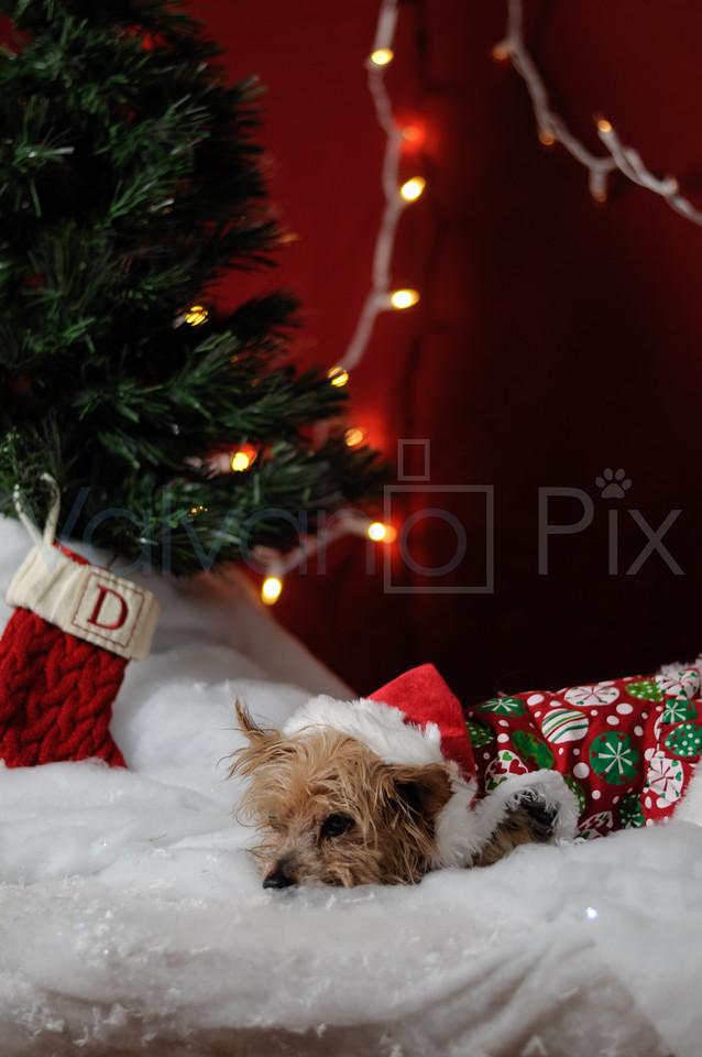 Holiday Portraits-6