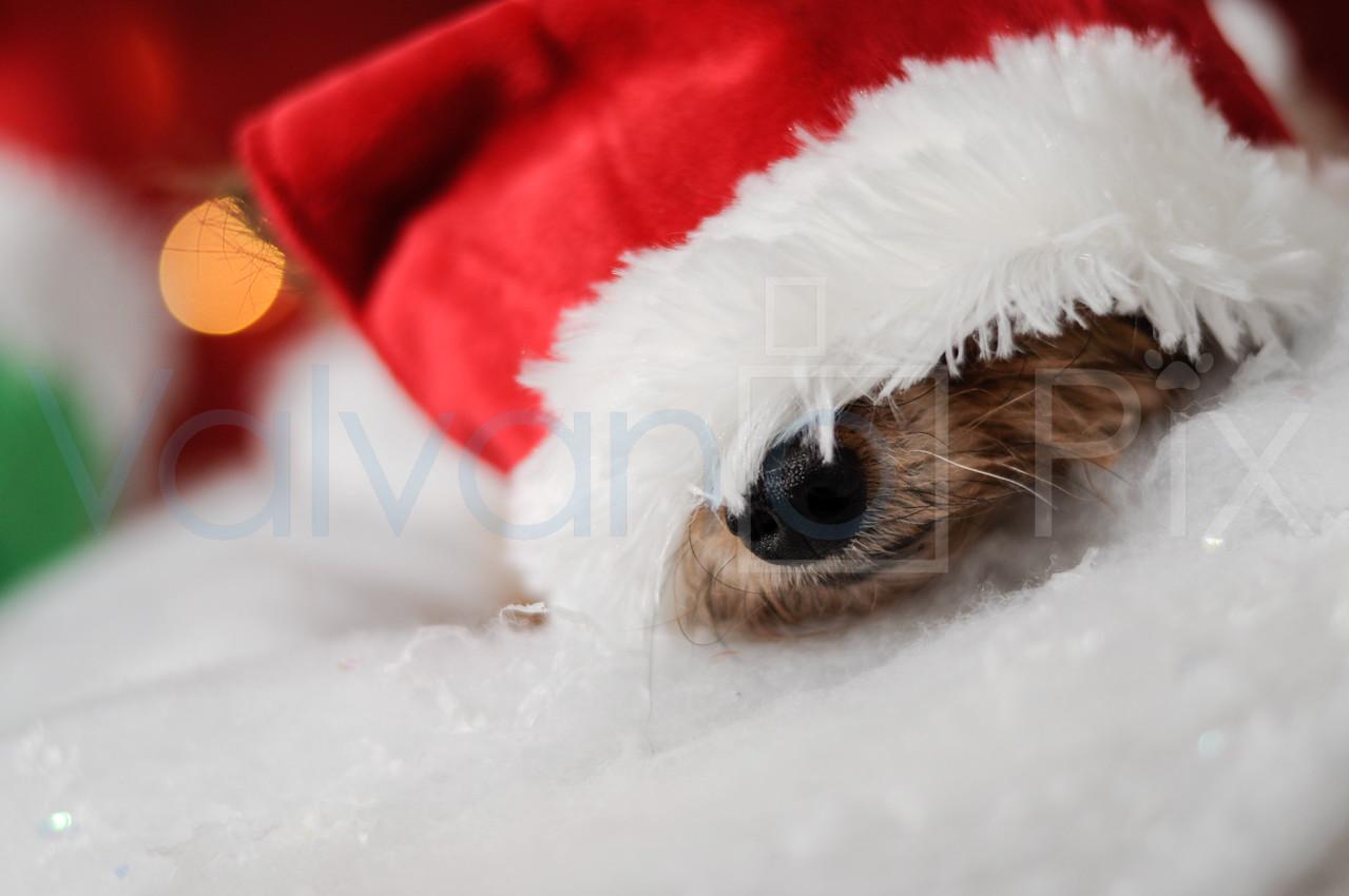 Holiday Portraits-21