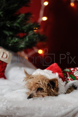 Holiday Portraits-8