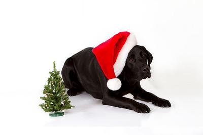 Dooney - December