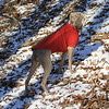 Dora : We just adopted Dora, formerly Gretchen, a 13 month old Weimaraner.  She'll be an awesome playmate to Maximus!