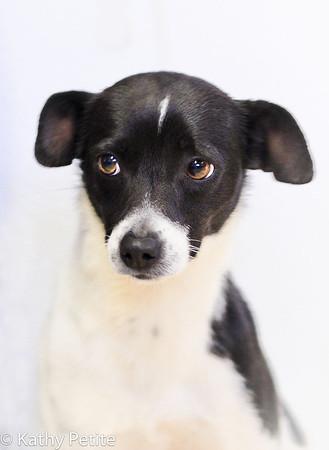 terrier1-0417ps