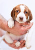puppy3-0306ps