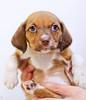 puppy2-0301ps