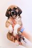puppy1-0293ps