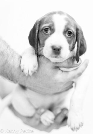 puppy3-0306psb&w