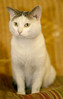 More About Kingston UPDATE.UPDATE: Kingston (6863) has a $50.00 vet certificate to help with his neutering and rabies at the time of adoption. He really is a fabulous boy and deserves a wonderful home. <br /> <br /> Kingston is an 18 month old Tabby with a pretty white and gray coat. He really likes attention and affection...will lay on your shoulder and gently rub his head against you. He truly is a wonderful boy with a sweet personality. <br /> <br /> For information on adoption please call the Douglas County Animal Shelter at 770-942-5961. The new owner is required to get their new pet a rabies vaccination and to have them spayed/neutered at the appropriate age. <br /> <br /> .