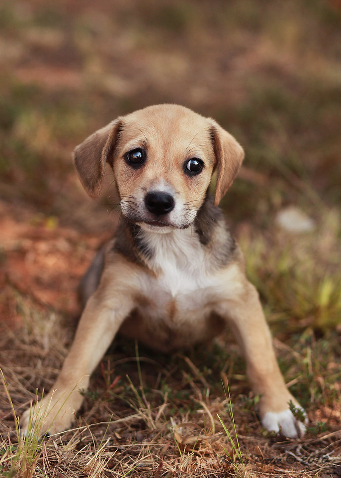 Sherri Adams/ Douglas County Animal Shelter--9-23-10