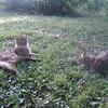 Douna & Doum (left) (06-30-09)
