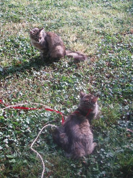 Douna & Doum (back) (06-30-09)