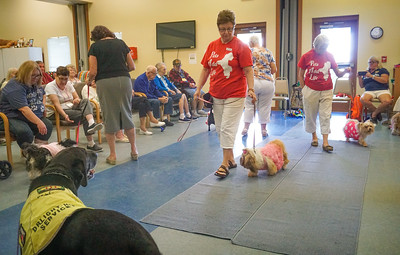 Pets Add Life, Therapy Dogs,   Assisted Living visits, 8 13 2018 ,  DSC06630