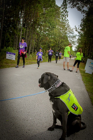 DrLight Encourages at the Annual Gulfside Hospice,  5K Walk/Run.  _0342-2
