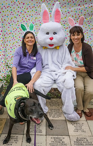 Gulfside Hospice CEO Linda Ward, Easter Bunny, DrLight  Therapy Dog,  Loves Kids  brings Joy,  Easter Egg Hunt,  Hospice,  3 24 2018