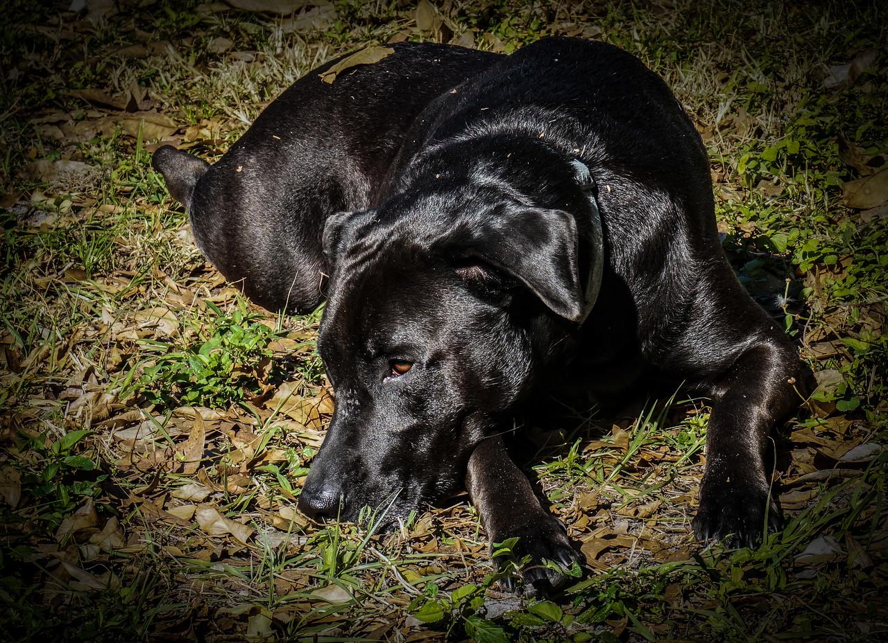 DrLight, Higher Service Dog,    02596-2