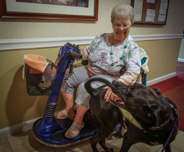 Atria, Windsor Woods, DrLight Therapy Dog and Friends, 08595
