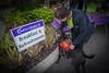 DrLight & Friends, 5K Walk for Gulfside Hospice,, DSC03253