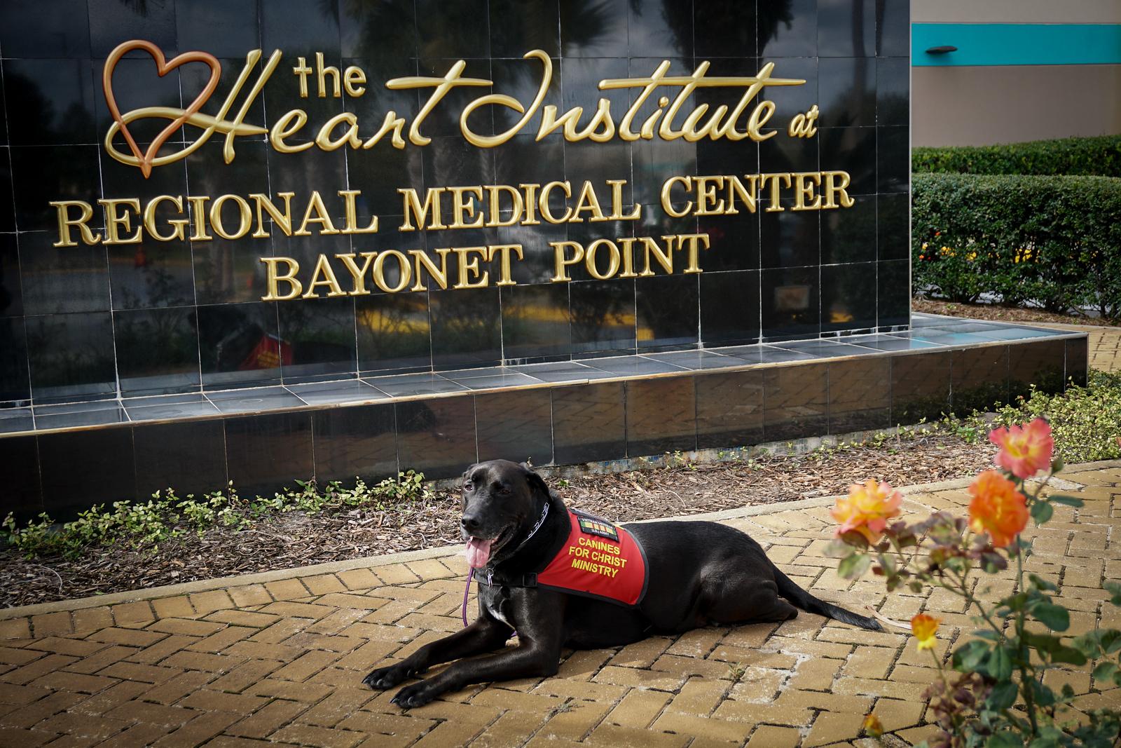 DrLight at Bayonet Point Medical Center. 11 29  2016, 04007