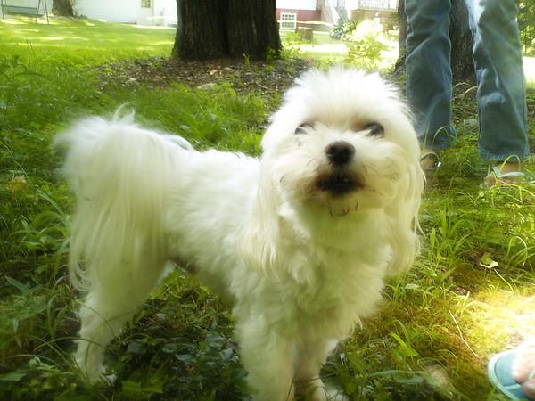 Dufour Family Pets
