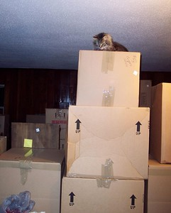 Dusty is queen of the boxes during our move