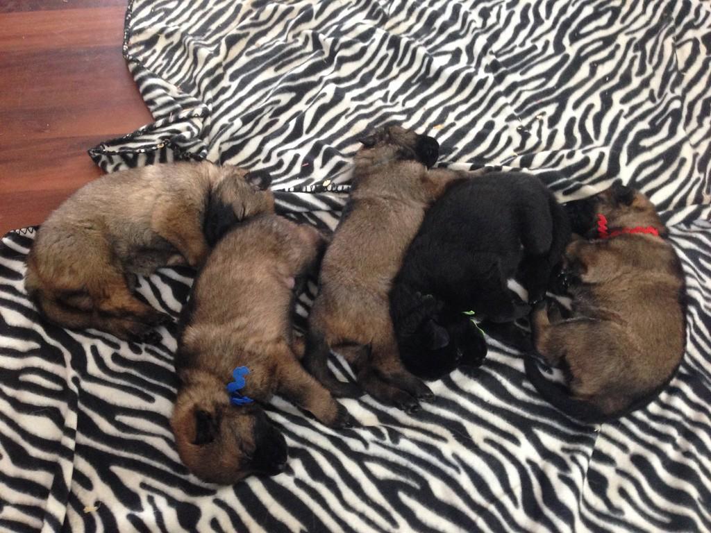 Puppy pile :)