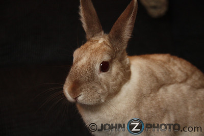Portrait of a Rabbit 2