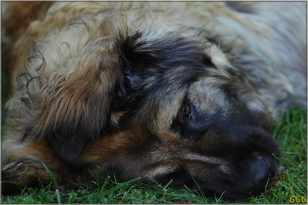 IMAGE: http://photos.corbi.eu/Pets/Easy-Edge-17mois/IMG0001/923590516_TWiqi-XL.jpg