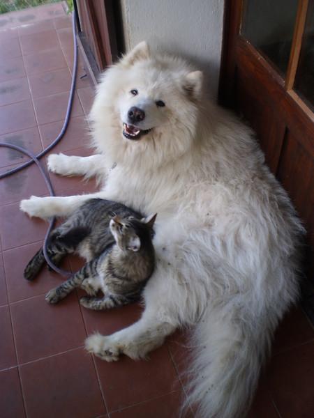 Eifel & Altaïr
