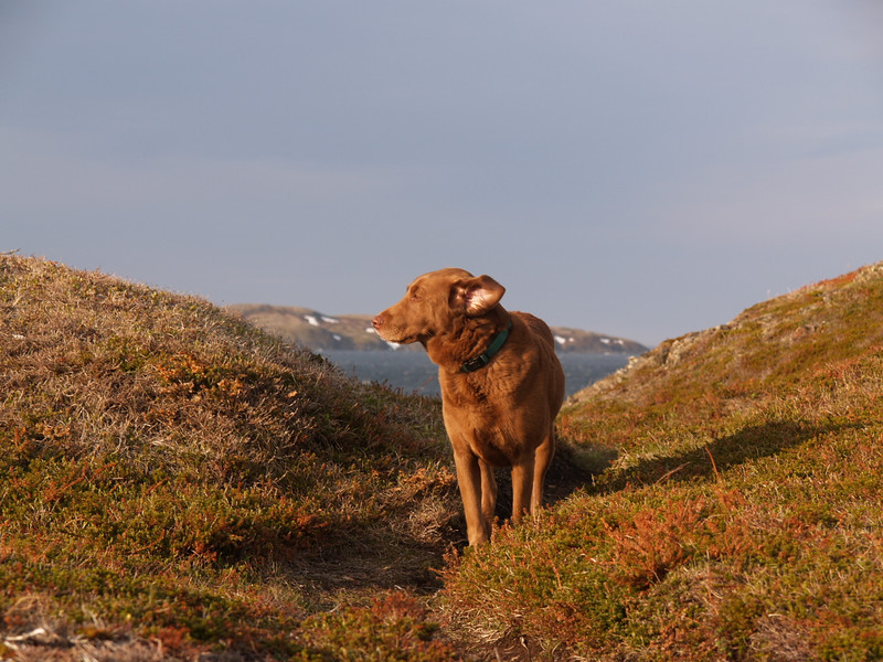 June 2007, vacation in Labrador.