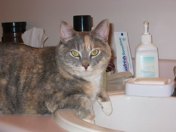 Bridget at the sink