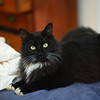 Cats_ - 04-17-2017 - ©BLM Photography 2017
