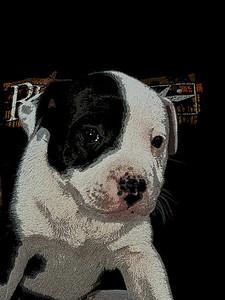 Elsie's puppy