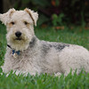 Beau in the grassp