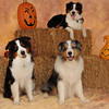 Friends of Abused Children Agility and Halloween :
