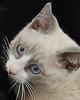 kitty RW portrait